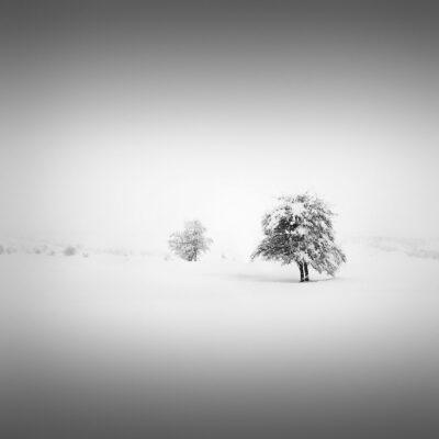 Catharsis I - In Your Shadow © Julia Anna Gospodarou 2013