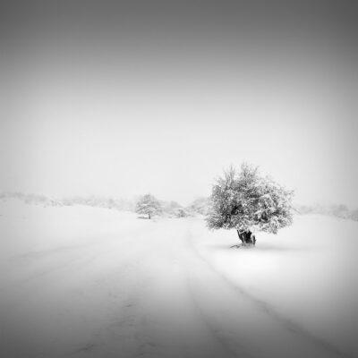 Catharsis V - New Beginnings © Julia Anna Gospodarou 2013