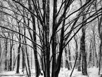 Silence © Julia Anna Gospodarou